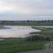 stilt pond Medmerry Nature Reserve